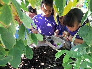 Field Trip: Touring School Garden's with the Farm to School Hui @ Mililani, Oahu | Mililani | Hawaii | United States